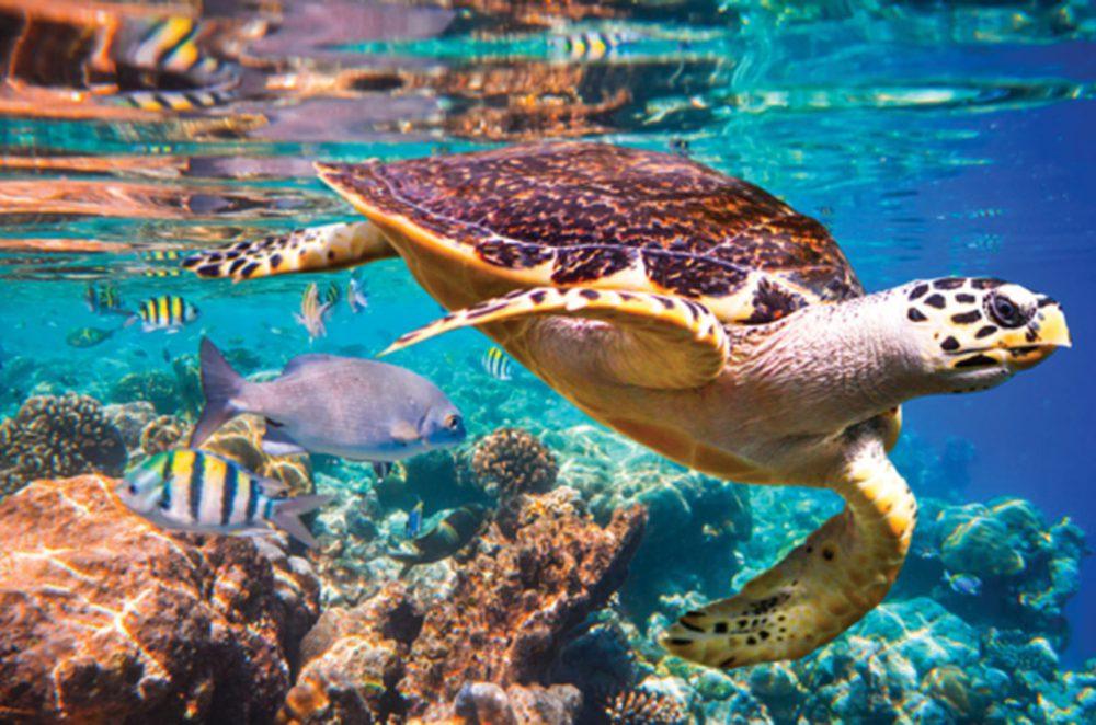 Caribbean nature